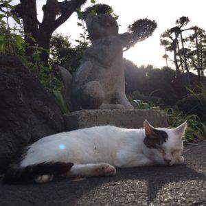猫好きなら一度は訪れたい御誕生寺:アクセスはバス?タクシー?